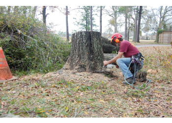 Beaumont tree service Environmental Tree Service
