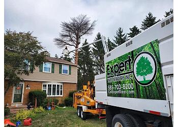 Rochester tree service Expert Tree Service