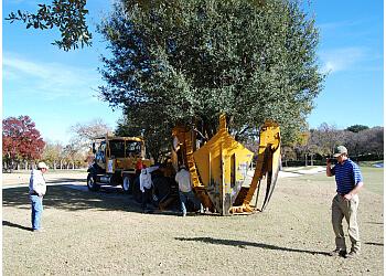 Frisco tree service Fannin Tree Farm