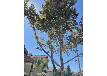 San Bernardino tree service Fernando's Tree Services