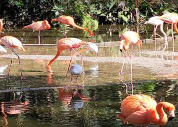 Pembroke Pines places to see Flamingo Gardens