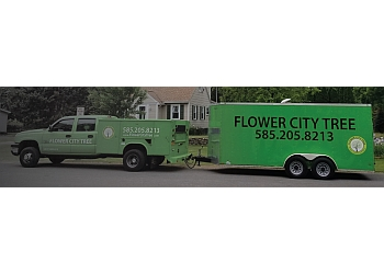 Rochester tree service Flower City Tree