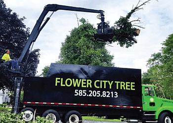 Rochester tree service Flower City Tree
