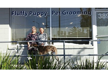 Fremont pet grooming Fluffy Puppy Pet Grooming