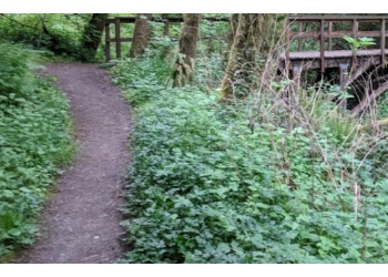 Portland hiking trail Forest Park