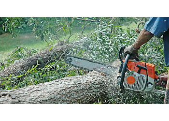 Oklahoma City tree service Forest Tree Service LLC