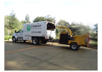 Santa Rosa tree service Forest Tree Services