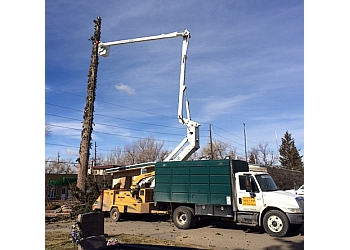 Fort Collins tree service Fort Collins Tree Care Inc.