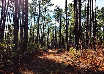North Charleston hiking trail Francis Marion National Forest