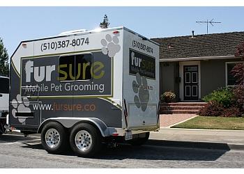 Fremont pet grooming Fur Sure Mobile Pet Grooming