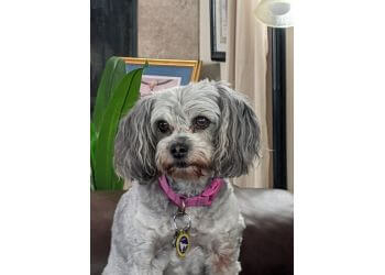 Chula Vista dog walker Fuzzy Buddies Pet Sitting