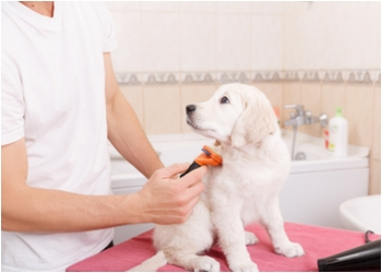 Richardson pet grooming Fuzzy Tails Grooming Boutique LLC