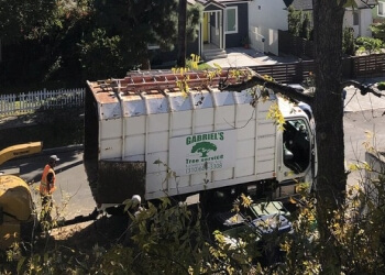 Los Angeles tree service Gabriel Tree Services & Landscaping