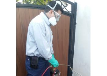 Downey pest control company Galindo Exterminator
