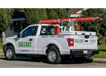 Rancho Cucamonga pest control company Gallant Termite and Pest Control
