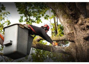 3 Best Tree Services In Albuquerque Nm Threebestrated