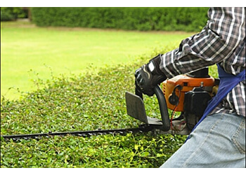San Francisco lawn care service GoGreen Lawns