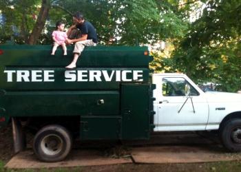 Philadelphia tree service Grace Tree Company LLC