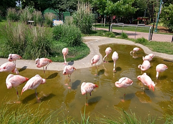 Sioux Falls places to see Great Plains Zoo