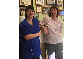Mesa pet grooming Green Bulldog Dog Wash and Spa