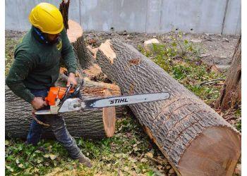 Dallas tree service Green Pine Tree Services