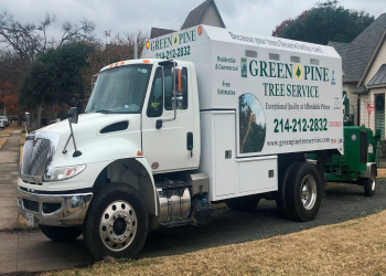 Dallas tree service Green Pine Tree Services