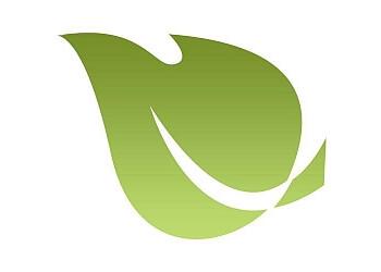 Toledo web designer Green Tree Media