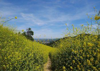 Compton hiking trail HACIENDA HILLS