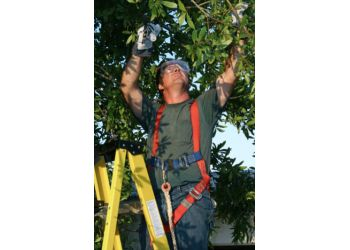 Henderson tree service HENDERSON TREE SERVICE