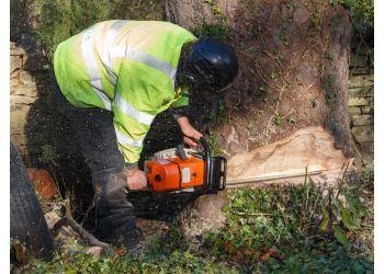 Arlington tree service Hallmark Tree Solutions