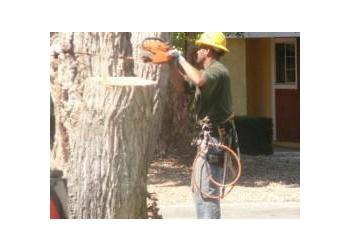 San Bernardino tree service Hamm's Tree Service