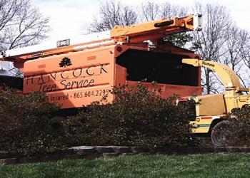 Knoxville tree service Hancock Tree Service