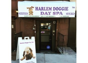 New York pet grooming Harlem Doggie Day Spa
