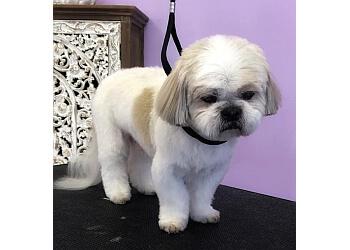 Huntsville pet grooming Haute Dogs