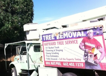 Phoenix tree service Hayward Tree