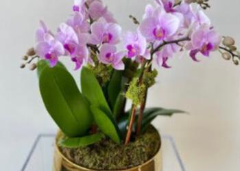 3 Best Florists In Alexandria Va Expert Recommendations