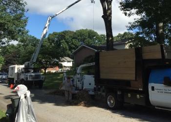 Pittsburgh tree service Hellmann's Tree Service