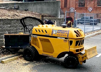 Boston tree service Hercules Stump Grinding, LLC