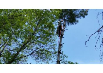 Cedar Rapids tree service High Angle Tree Service LLC