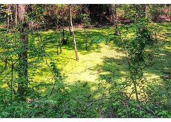 Baton Rouge hiking trail Hooper Road Park