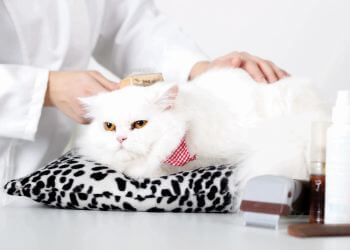 Des Moines pet grooming In-Home Pet Care & Grooming