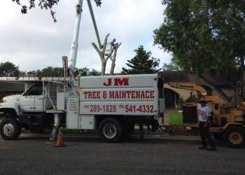 Brownsville tree service JM Tree Service & Maintenance