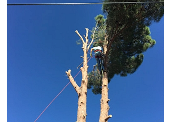 Midland tree service JR's Tree and Field Services