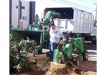 Fremont tree service JTS Jose Tree Service, Inc
