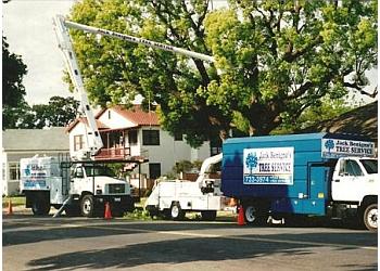 Visalia tree service Jack Benigno's Tree Service Inc