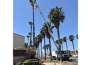 Oxnard tree service Javier's Tree Service Inc.