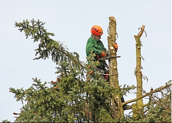 Port St Lucie tree service Jay's Perfect Palm Discount Tree Trimming Service