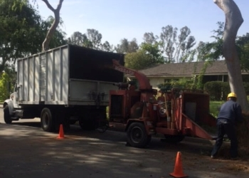 Fullerton tree service Jeff Buchanan Tree Service