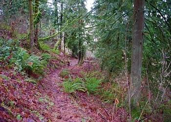 Gresham hiking trail Jenne Butte Park Trail