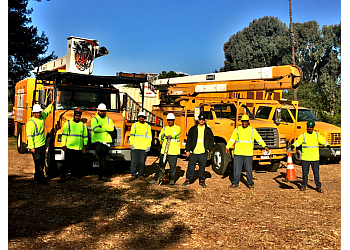Long Beach tree service Jimmies Tree Service